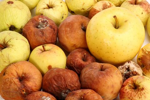 rotten_apples