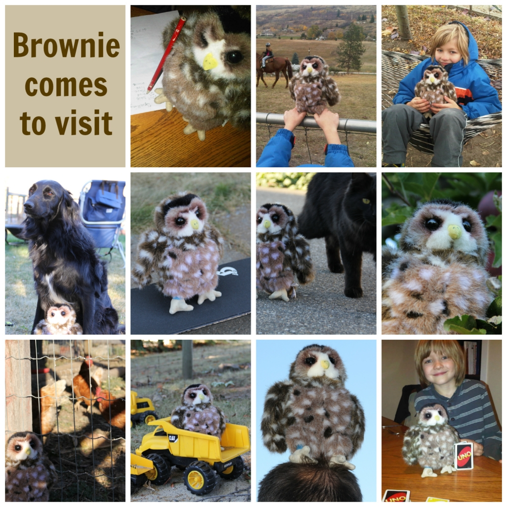 Brownie comes to visit